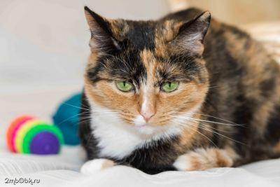 Взять кошку Пелагея в добрые руки Бирюлево
