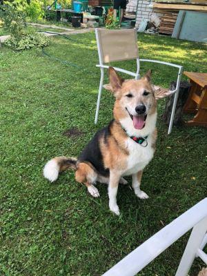 Собака Полкан из приюта нашла дом Бирюлево