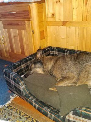 Собака Дени из приюта нашла дом Бирюлево