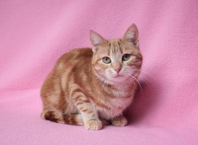 Взять кошку Поночка из приюта в дар Бирюлево