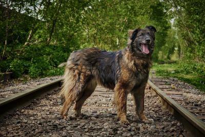 Взять собаку Кураж из приюта в добрые руки  Бирюлево