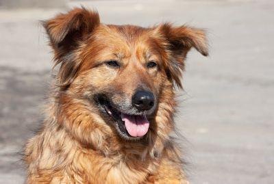 Взять собаку Радка из приюта в добрые руки Бирюлево