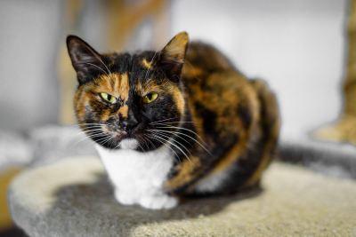 Взять кошку Крапинка из приюта в добрые руки Бирюлево