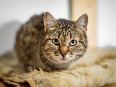 Взять кошку Соня в добрые руки из приюта Бирюлево