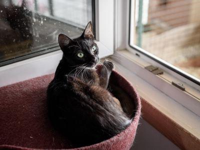 Взять кошку Люси из приюта в дар Бирюлево