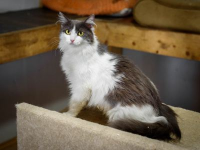Взять кошку Жемчужина из приюта в добрые руки Бирюлево