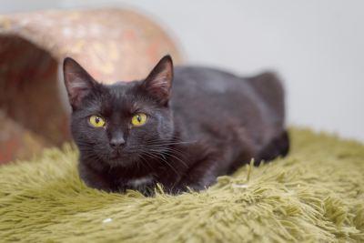Взять кошку Наоми из приюта Бирюлево в дар Бирюлево