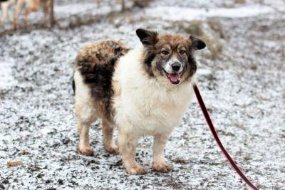 Взять собаку Рози из приюта Бирюлево