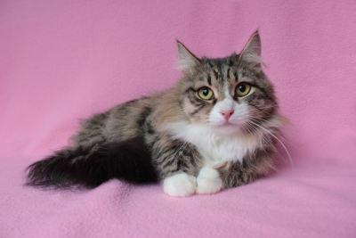 Взять котика Рысь из приюта в добрые руки Бирюлево