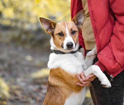 Взять собаку Шайни из приюта Бирюлево в дар Бирюлево