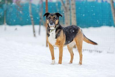 Взять собаку Ириска из приюта Бирюлево Бирюлево