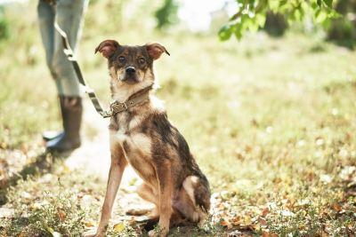 Собака из приюта Скуби нашла дом Бирюлево