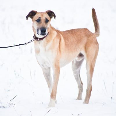 Взять собаку Степан из приюта Бирюлево