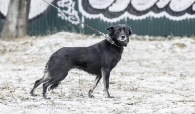 Собака Тинки из приюта нашла дом Бирюлево