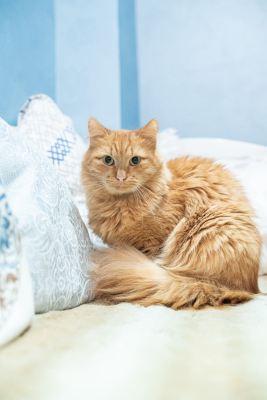 Взять кота Симба из приюта в добрые руки Бирюлево