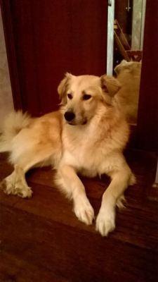 Собака из приюта Ваниль нашла дом! Бирюлево