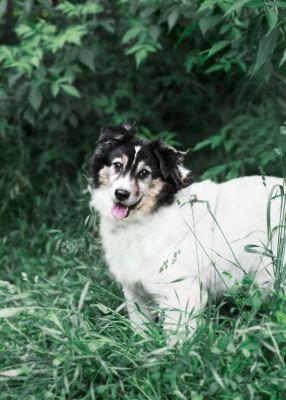 Взять собаку Жером из приюта Бирюлево