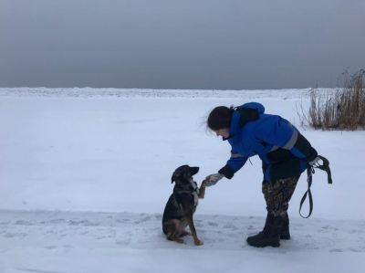 Собака Ася из приюта Бирюлево нашла дом и семью! Бирюлево