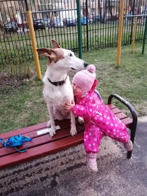 Собака Тея из приюта Бирюлево нашла дом Бирюлево
