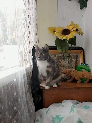 Кошка из приюта Зарина нашла дом Бирюлево