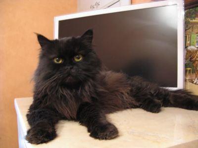 Кошка Жанетта из приюта нашла дом! Бирюлево