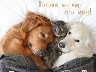 """Анонс выставки собак """"У любви нет породы"""""""