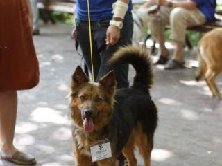 Вот так весело прошла выставка собак нашего приюта!
