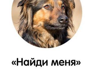"""Анонс выставки бывшедомашних собак из приюта """"Найди меня"""""""